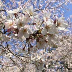 3月のさくらじま 〜噴火回数272回 爆発的噴火178回含む〜