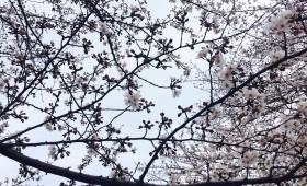 連載◆上野三樹「月刊夢子」第2回「2016年3月」