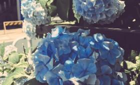 連載◆渡辺真綾「夢色ミックスジュース」第4回「憂鬱な雨はブルースと」